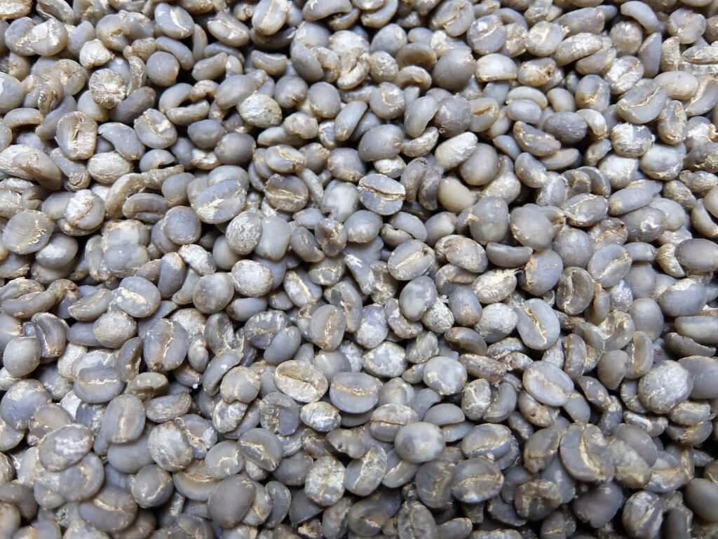 ブラジル 手摘み完熟豆 -1
